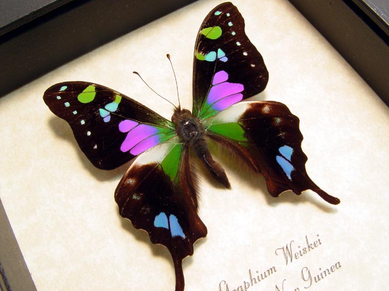 graphium-weiskei Last minute Mothers Day Gift!